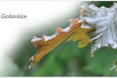 Trauerkarten Trauerkarte Motiv Herbstblatt
