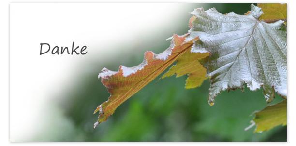 Trauerkarten Motiv Herbstblatt 019 BL