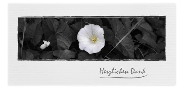 Danksagung Motiv Blume Margerite 045 BL