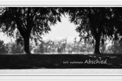 Trauerkarte, Bilder, Bäume, Baum, Abschied, Trauer Motiv - Nr. 015 BA