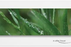 Trauerkarten Bilder Regentropfen, Pflanzen, Motiv - Nr. 016 BL
