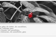 Trauerkarte, Bilder, Abschied, Pflanzen, Motiv - Nr. 017 BL