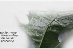 Trauerkarte, Bilder, Wassertropfen, Pflanze, Trauer, Motiv - Nr. 020 BL