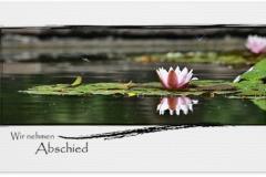Trauerkarte, Bilder, Seerose, Teich, Abschied, Trauer, Motiv - Nr. 027 BL