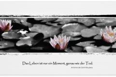 Trauerkarte, Bilder, Seerosen, Teich, Lotus, Motiv - Nr. 028 BL