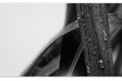 Trauerkarte, Bilder, Regentropfen, Pflanzen, Motiv - Nr. 033 BL