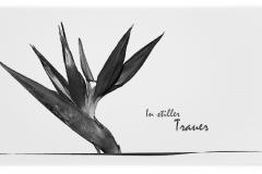 Trauerkarte, Bilder, Strelitzie, Motiv - Nr. 042 BL