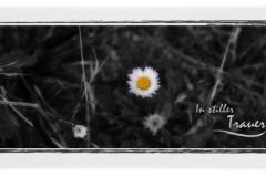Trauerkarte Motiv Margerite Wiese 045 BL