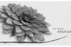 Trauerkarte, Bilder, Blume, Margerite, Motiv - Nr. 016 BW