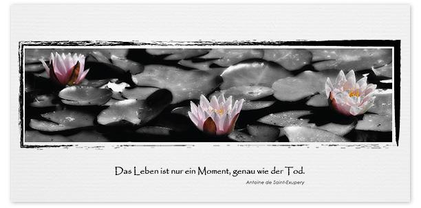 Trauerkarten Motiv Seerosen 028 BL