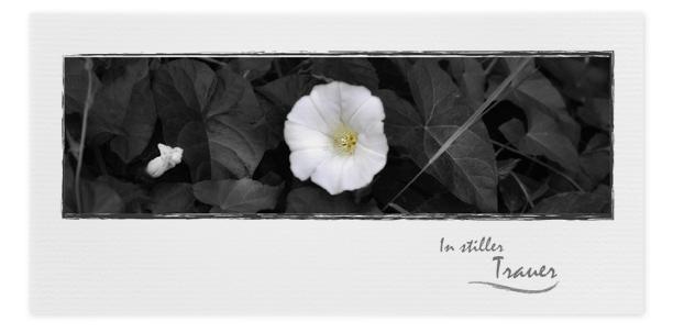 Trauerkarte Motiv Blume Margerite 045 BL