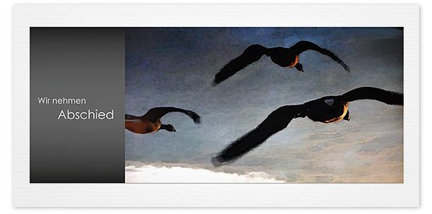 Trauerkarten Motiv Wildgänse 017 VO