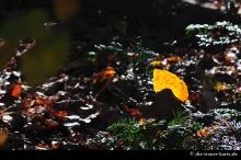 Herbst_017